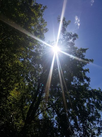 Tree Sunbeam Lens Flare Low Angle View Sunlight Sun Nature Growth Sky No People Beauty In Nature Outdoors Star - Space Branch Day Freshness Astronomy