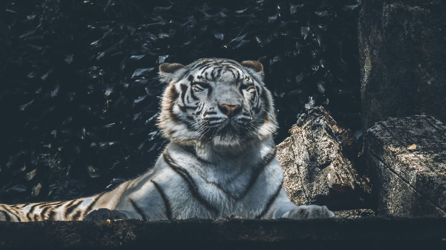 Animal Wild