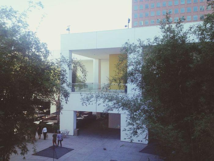 Golden Tone peeking through The Hammer Los Ángeles