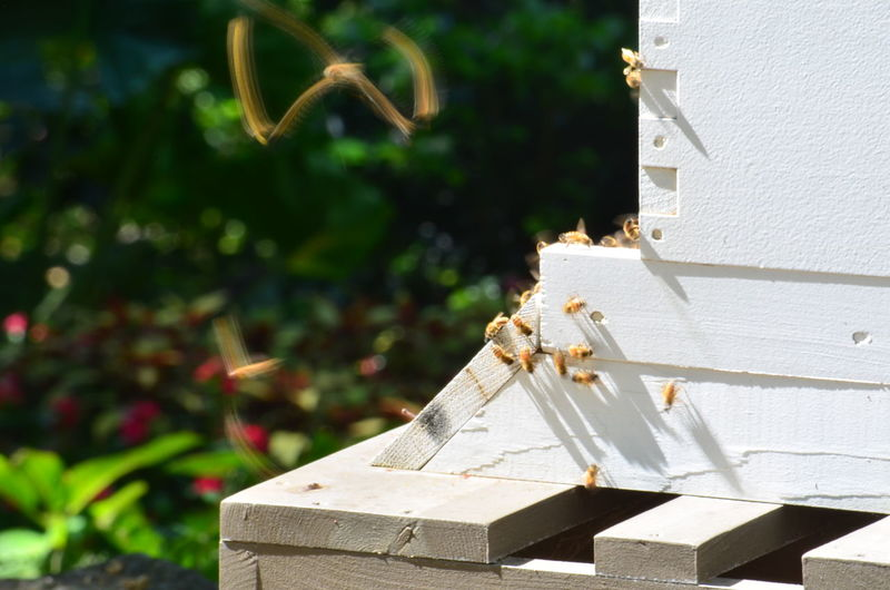 Bees Flight Of The Bumblebee Long Exposure Shot Architecture Beauty In Nature Building Building Exterior Built Structure Close-up Day Flower Focus On Foreground Growth House Long Exposure Nature No People Outdoors Plant Religion Staircase Sunlight White Color Wood - Material