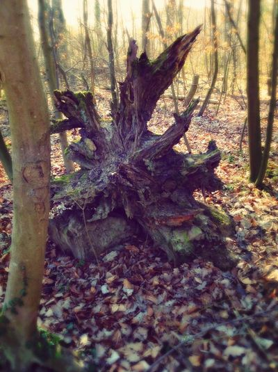 Scary tree Chill Mood  Relaxing Im Wald In The Forest