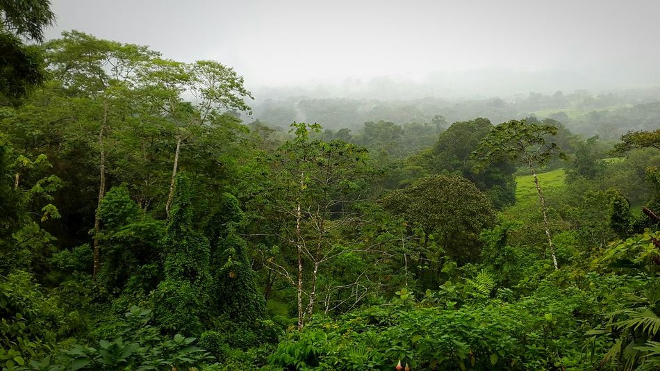 Rainforest as far as the eye can see 😊 Perfect Outdoor Photography Costa Rica Nature Photography Showcase July Mist Arenal Volcano La Fortuna Alajuela