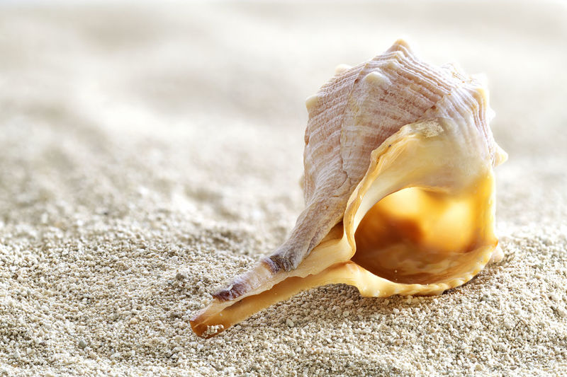 Muschel Am Strand Muschelgehäuse Schneckengehäuse Makro Photography Stack Foto Close-up Shell Animal Shell No People Nature Land Seashell Animal Wildlife Day Still Life Single Object Beauty In Nature Animal Food One Animal Outdoors Food And Drink Animal Themes Animals In The Wild Focus On Foreground