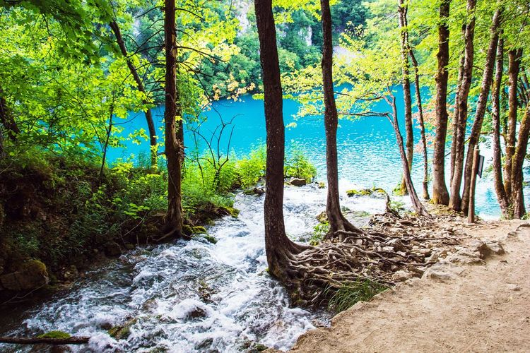 River Refraction Rockriver Tranquility Journey Tourism Beauty In Nature Travel Water Scenics Croatia Mountain Rock Lake Reserve Plitvice Plitvice National Park Plitvicelakes Plitvicelake Plitvickejezera Plitvickajezera Waterfall Plitvice Lakes National Park Plitvicka Jezera Nacionalni Park Tree