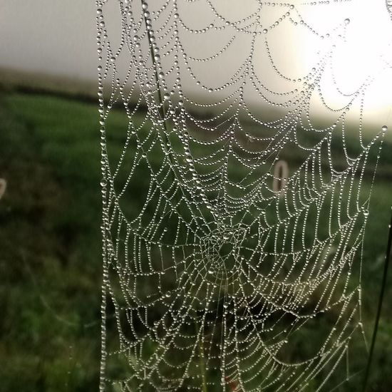 Spiderweb In Morning Dew Natural Pattern Droplet Dew Water Focus On Foreground Beauty In Nature Scenics Pearl Drop Web Early Morning Nature Dewdrops_Beauty Drop Fragility Close-up Spider Web Water Wet Natural Pattern Dew Nature Rain Pattern Focus On Foreground Droplet Beauty In Nature Water Drop