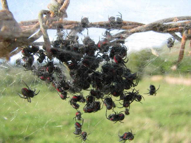 Aranhas Aracnideos Spiders EyeEm Gallery Kiko Sene Photography Eyeem Photography