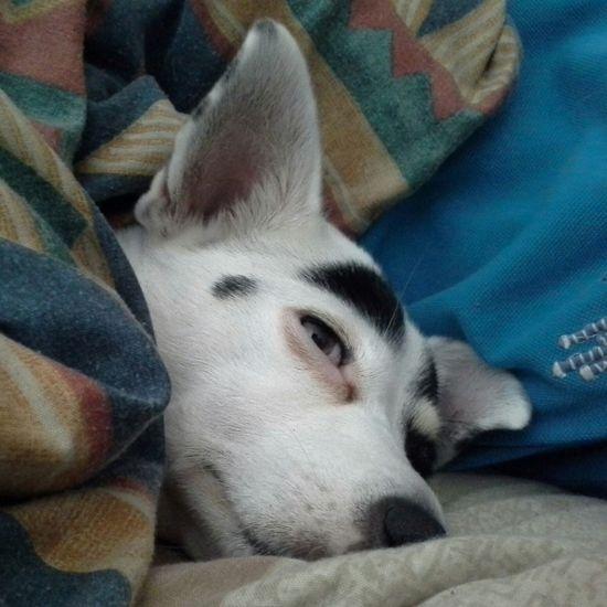 No Filter, No Edit, Just Photography Unfiltered Crossbreed Ilovemydog Puppy Love Dog Love Dogslife MommysGirl My Pet