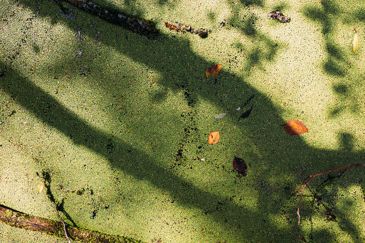 High angle view of shadow of plants on land