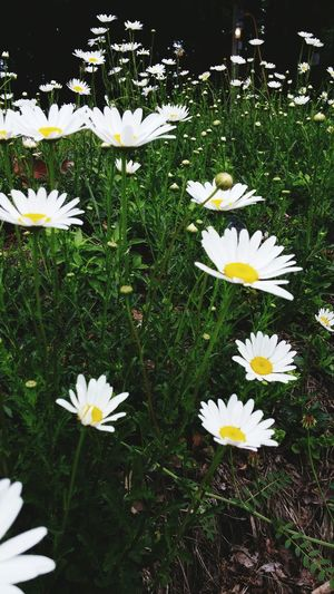 Taking Photos Relaxing Naturelovers Flowers, Nature And Beauty Small Flowers Beautiful Flowers Flower Collection Feild Nature_perfection