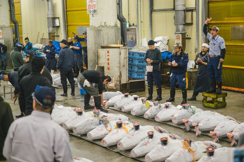 Adult Adults Only Day Fish Food Freshness Full Length Indoors  Industry Large Group Of People Men Occupation Only Men People Real People Seafood Standing Tsukiji Fish Market Tsukijifishmarket Tuna Tuna Auction Tuna Fish Tunaauction