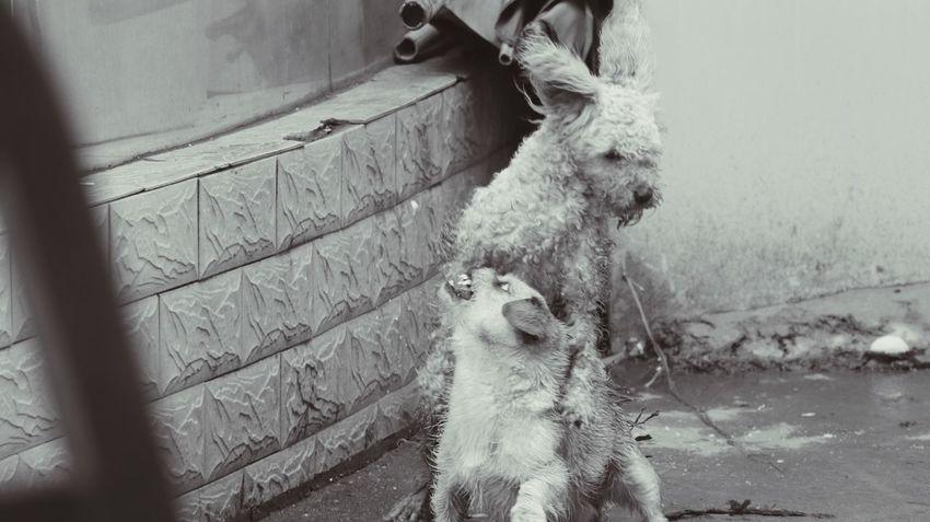 野狗 Forlorn ! Messy City Corner Captured Moment Streetphotography Stray Art Winter Cool Black And White Black And White Photography Lonely EyeEm Dog Stray Dog They Roadside