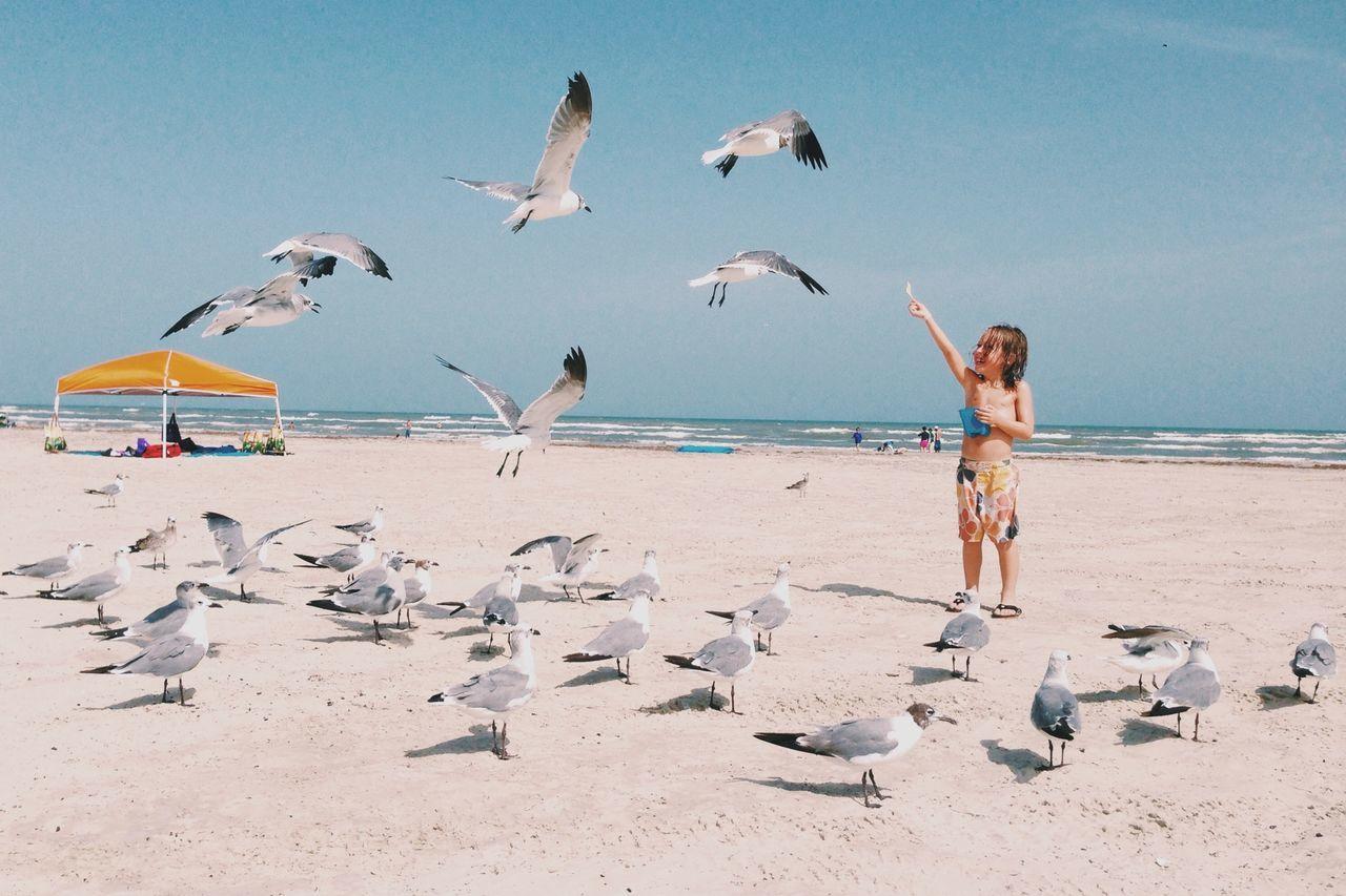 Cute Boy Feeding Seagulls At Beach