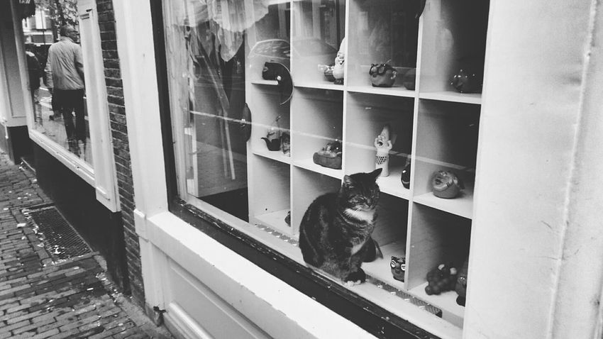 Hanging Out Taking Photos Hello World Picturing Individuality Interesting Perspectives Streetphoto_bw B&w Street Photography Cat Showcase: December EyeEm Best Shots Cats Cat Lovers Catoftheday Caturday Check This Out Window Urban Landscape Pet Photography  Hello World My Best Photo 2015 Adventure Buddies The Tourist Here Belongs To Me Things I Like Telling Stories Differently