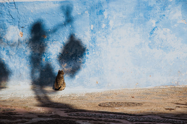 Cat sunbathing in front of a blue wall with the shadow of a streetlamp