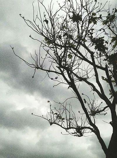Tree And Sky Tree Trunk