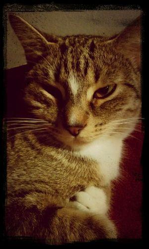 My baby cat look at me lol. 12/27/12<3