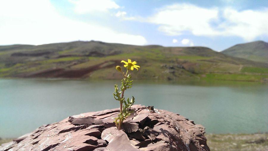 Nature Flower Iran Beuty First Eyeem Photo