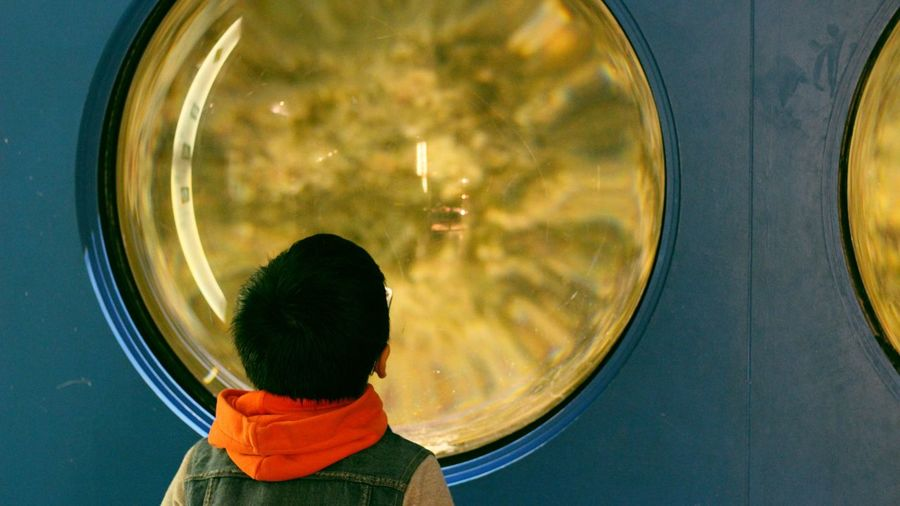 Rear view of boy looking at glass