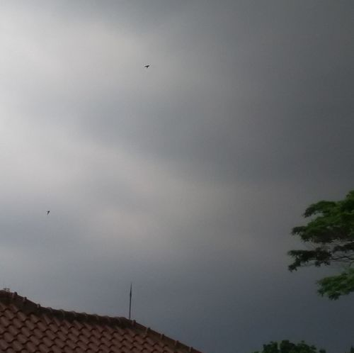 Flying High In The Sky Flying Higher Flying High And Proud! Flying Bird Sky No People Nature Outdoors Stormy Clouds