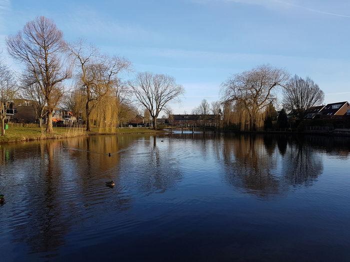 Ducks Outside Tooday.! Water Tree Reflection Sky