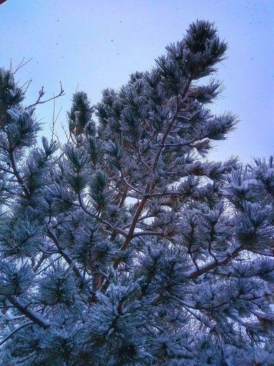 """Snowing!"""