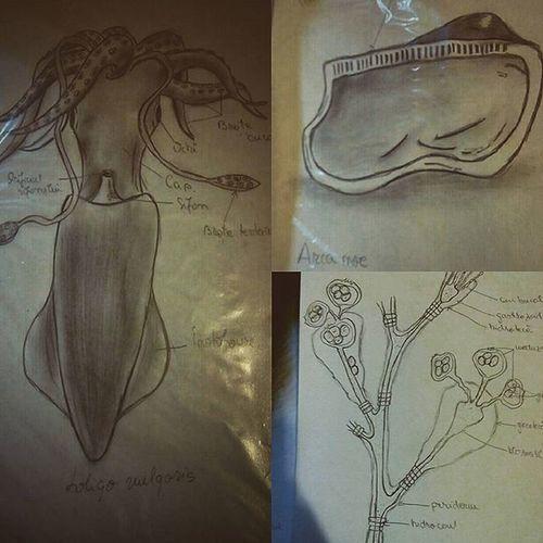 Animalbiology Phylummollusca Hydrozoa
