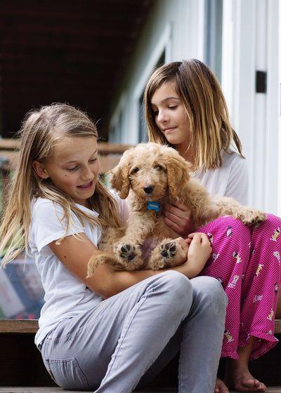 Puppies Love Puppy Love Bonding Friendship Bff Labradoodle Childhood