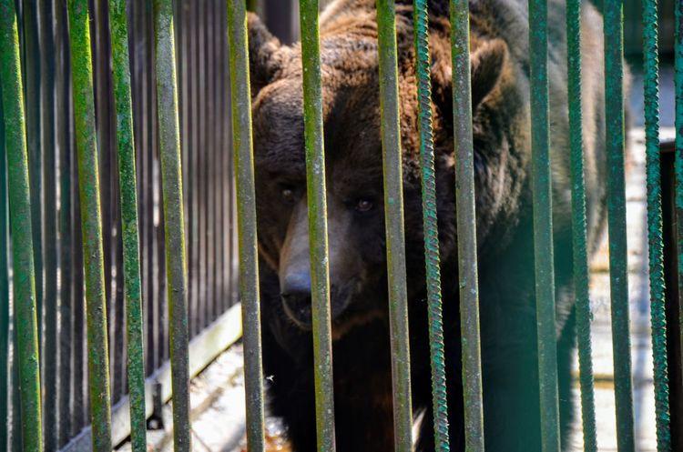 One Animal Day Nature Mammal Animal Themes No People Mytravel Travel Belarus Nature Belarus Bear