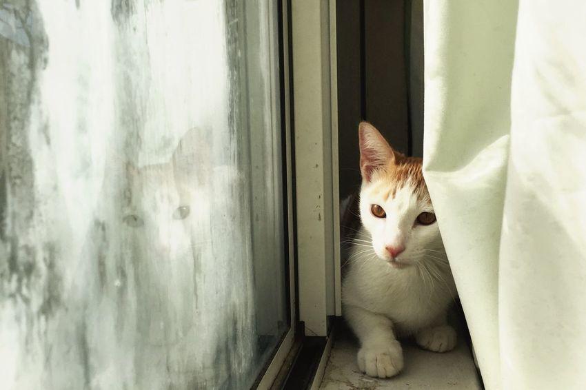 meow Cat Modelkitty Ozzy Kitten Cute Pretty Lighting