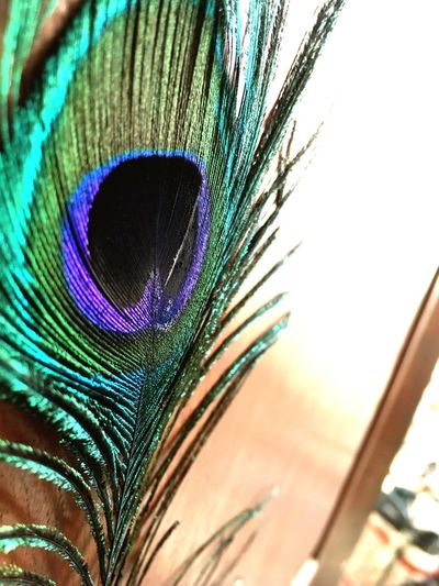 Peacock Feather Peacock Beauty In Nature Close-up No People Multi Colored Beauty Feather  First Eyeem Photo First Eyeem Photo Green Color Mobilephotography