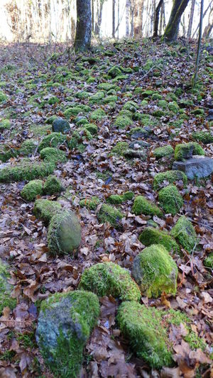 Forest, Moss, No People, Outdoors, Nature, Stone, Stones, Old Vulcano in Borzsony mountain, Hungary