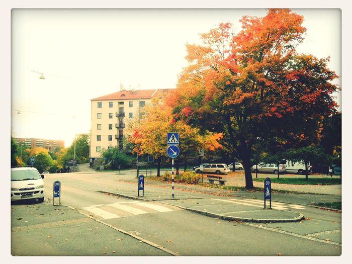 Hösten speglar sig i trädet