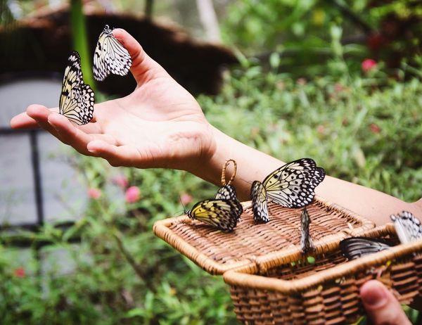 Butterflies Market Reviewers' Top Picks