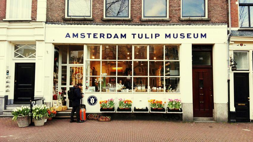 Amsterdam Tulpen Museum Tulpen Tulips Tulips Flowers Blumen Tulip Museum Blumenladen Flower Shop