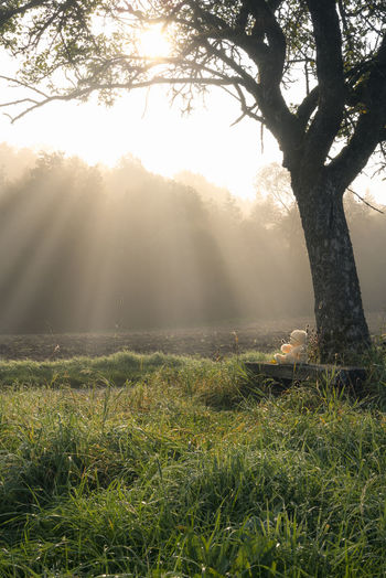 Enchanting morning in nature with a teddy bear sitting on a wooden bench under a big tree, surrounded by tall grass and a forest bathed by the sun rays. Early Mornings Sunrays Conceptual Photography  Early Winter Fog Foggy Morning Grass Late Autumn Nature No People Outdoors Plush Toy Sunlight Sunrise Teddy Bear Tree Tree Trunk Under Tree