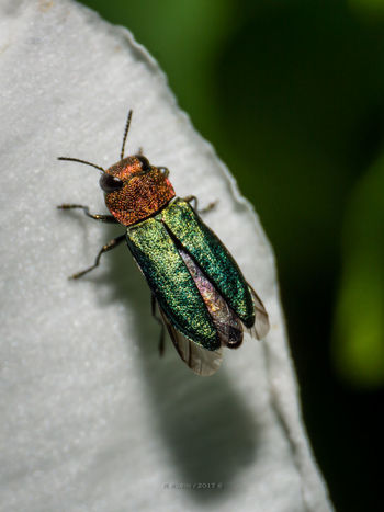 Insect One Animal Animal Wildlife Animals In The Wild Animal Themes Green Color Close-up No People Nature Day Indoors