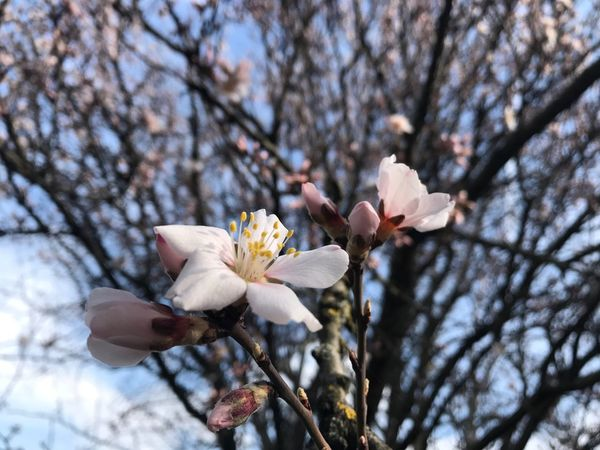 Millennial Pink Flower Growth Fragility Beauty In Nature Nature Tree Branch Blossom Freshness Springtime Close-up Spring Is Coming  Spring Flowers Growth Spring Sunlight Blooming Flower Head Outdoors Petal No People Day Plum Blossom Sky