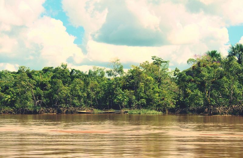Calm day on the river Boat Sailing River Guyana Essequibo River Guyana Brownwater Trees Sand Tree Cloud - Sky Nature Water Outdoors Sky River Tranquility No People Landscape Palm Tree Forest Scenics Beauty In Nature Day An Eye For Travel