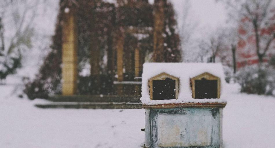 像冬天一样的四月 Winter Cold Temperature Snow Close-up Architecture Snowfall