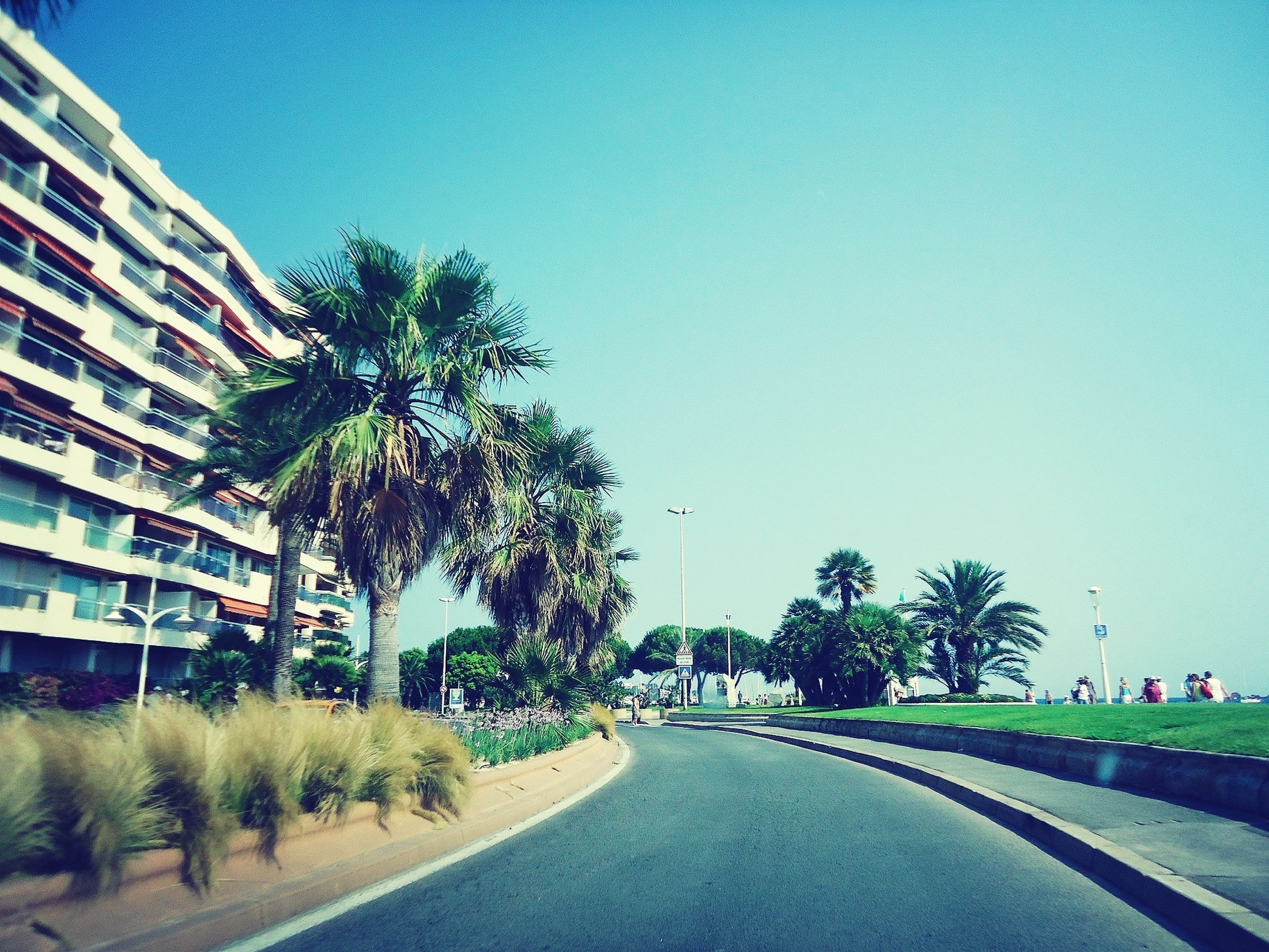 clear sky, the way forward, building exterior, blue, road, architecture, built structure, tree, copy space, street, transportation, diminishing perspective, road marking, palm tree, street light, empty, vanishing point, city, long, empty road