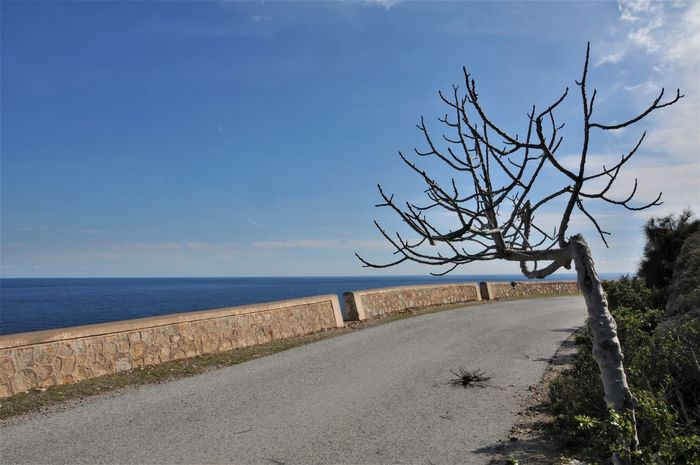 Abondoned Bare Tree Coastroad Day España No People Road Sea Sky The Way Forward Tranquil Scene Tree Water