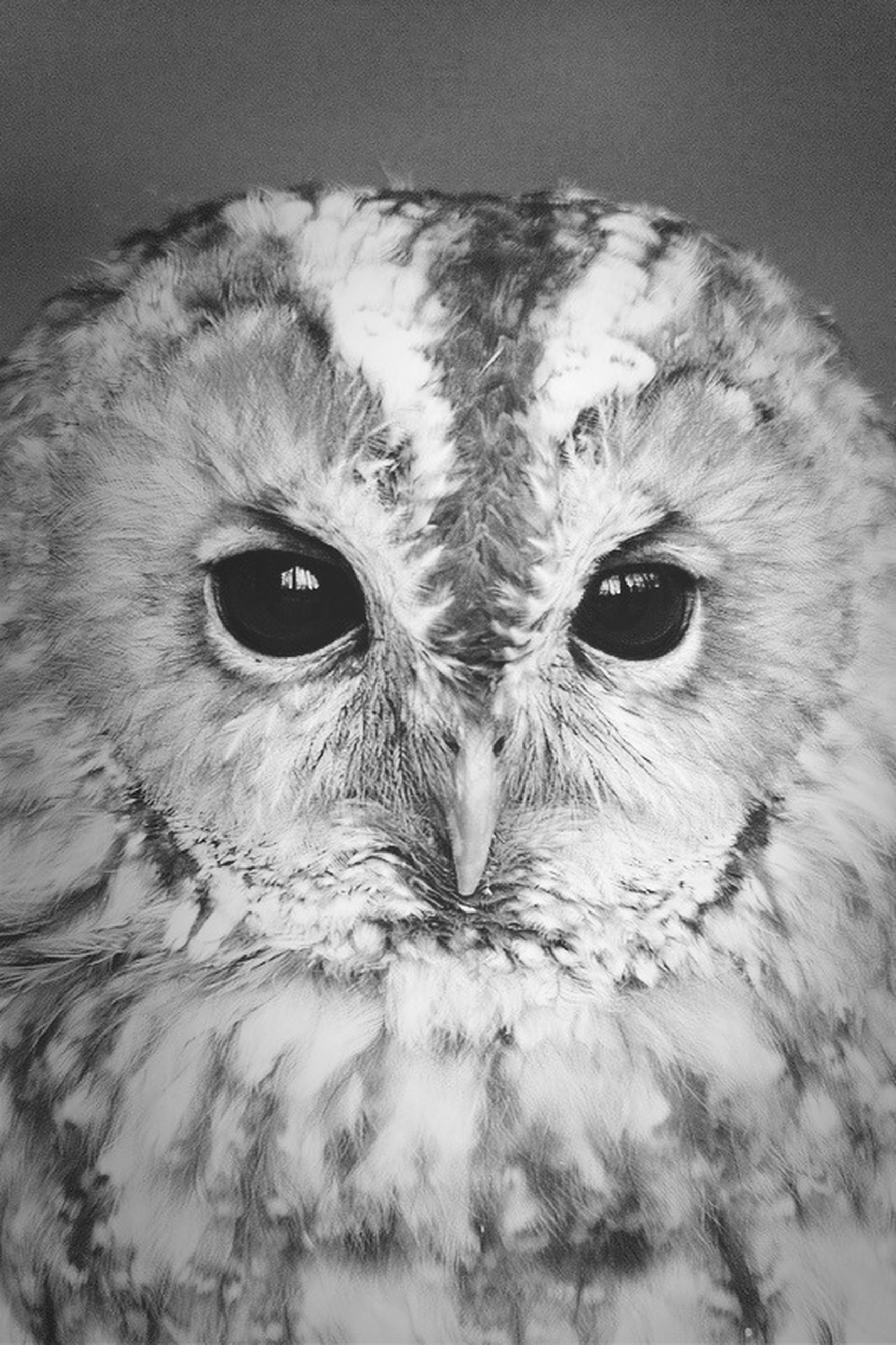 animal themes, one animal, portrait, animal head, close-up, bird, looking at camera, wildlife, animal eye, indoors, animal body part, pets, animals in the wild, animal hair, domestic animals, front view, bird of prey, beak, mammal