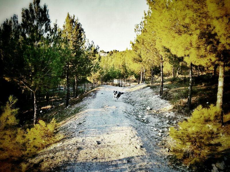 dog Dog Walking The Dog Trees Enjoying The Sun My Dog A Dogs Life Border Collie Samsung Galaxy Note II Sun