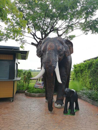 African Elephant Animal Trunk Tree Elephant Safari Animals Indian Elephant Animal Themes Sky