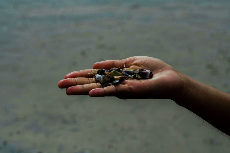 Cropped hand holding shells at beach
