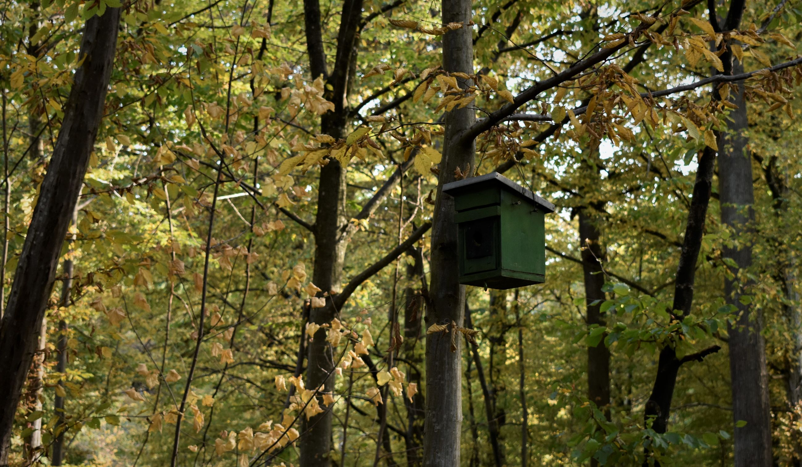 LOW ANGLE VIEW OF BIRDHOUSE HANGING ON TREE