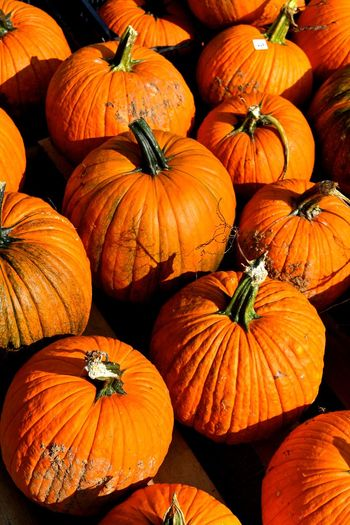 Pumpkins Agriculture Autumn Food Food And Drink Freshness Halloween Nature No People Orange Color Pumpkin Pumpkin Patch Pumpkin Seed Pumpkinpatch Squash - Vegetable Still Life Vegetable