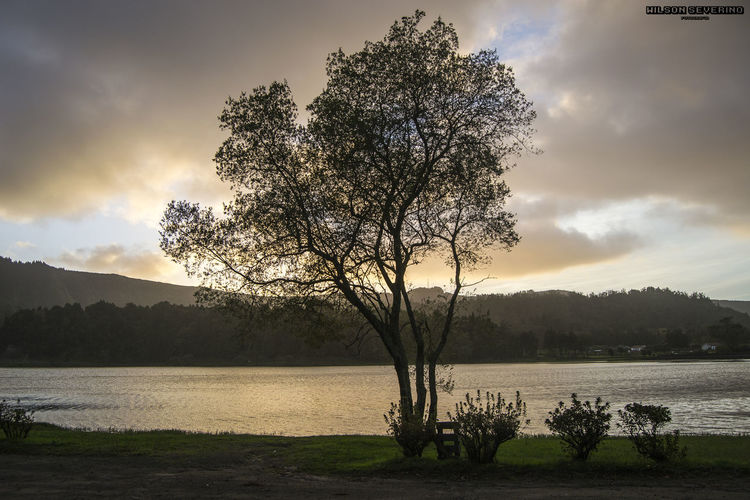 Tree by lake against sky during sunset