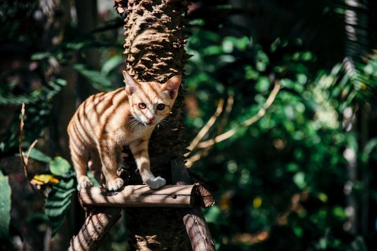 Ginger kitty cat under the tree in garden