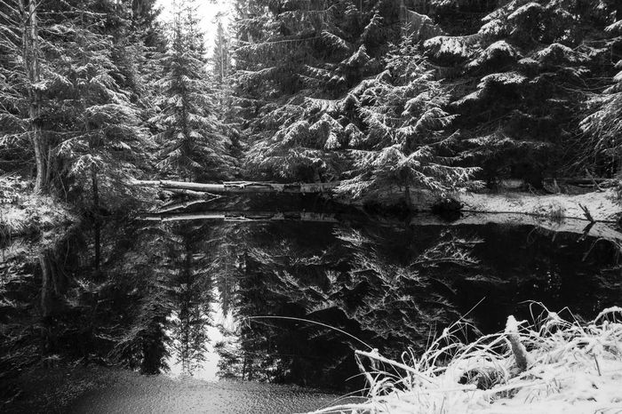 December in Dalarna, Sweden 2014 Black And White Blackandwhite Dalarna Dalecarlia Day December Europe Forest Frost Gagnef Nature No People Northern Europe Outdoors Scandinavia Snow Sweden Tranquility Tree Water